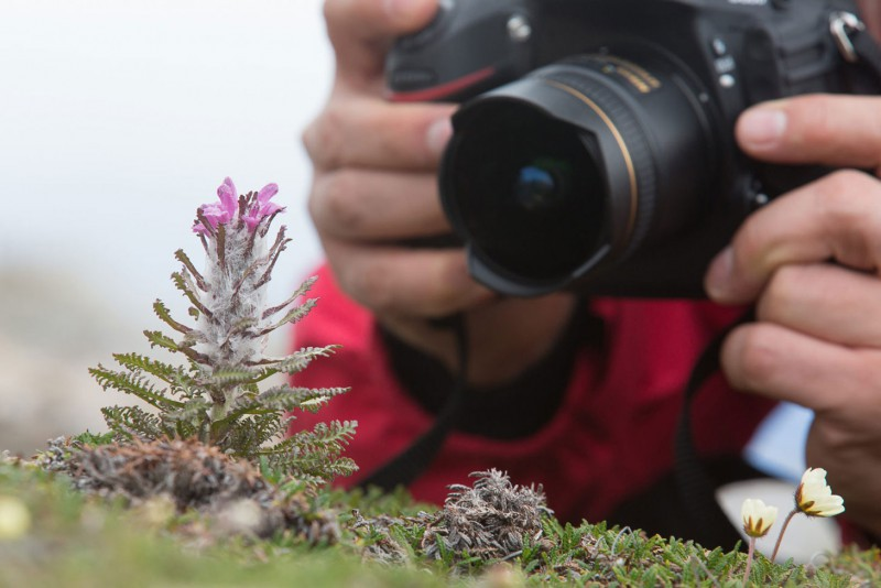 Afbeelding van Foto Workshop Groenland Arjen Drost Oceanwide Expeditions
