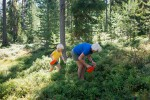 Hotelrondreis Zweden Yngvi Johan Willner Blueberry Picking