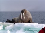 Spitsbergen Poolreis Gletsjers En Kvitoya Mike Murphy Oceanwide Expeditions