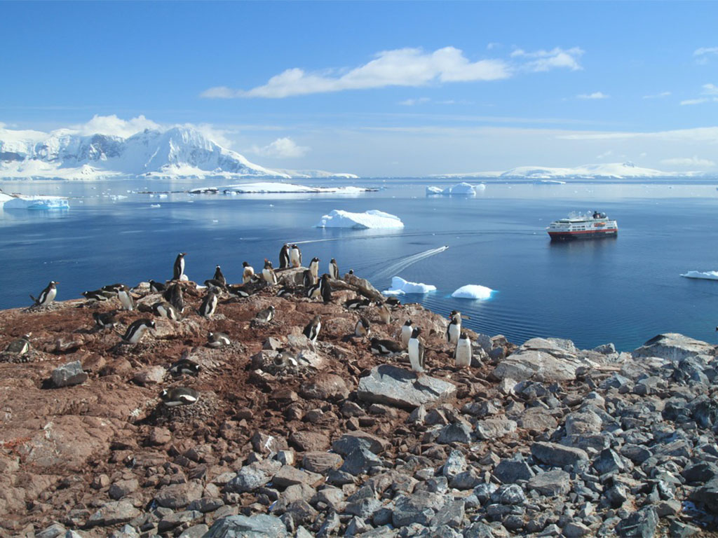 Cuverville Island, Antarctica ezelspinguin kolonie