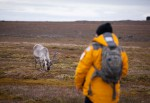 Expeditiereis-Spitsbergen-10-dagen-per- Ultramarine-Quark-Expeditions-reindeer-AcaciaJohnson.jpg