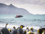Pinguin-reis-Oceanwide-Expeditions-Dietmar-Denger-7.jpg