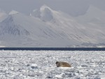 Spitsbergen-Arctische-reis-ocean-wide-expeditions-6.jpg