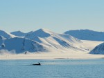 West-Spitsbergen-Quark-Ocean-Adventurer-3.jpg