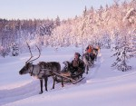 reindeer_safari_medium_1437135549.jpg