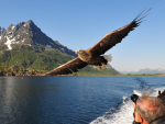 trollfjord-sea-eagles-rib-safari-hurtigruten.PNG